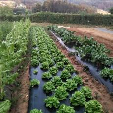Ecogranja 'San Isidro' de Renacer