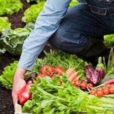 Curso de agricultura ecológica