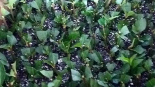curso-agricultura-biologica-renacer-06