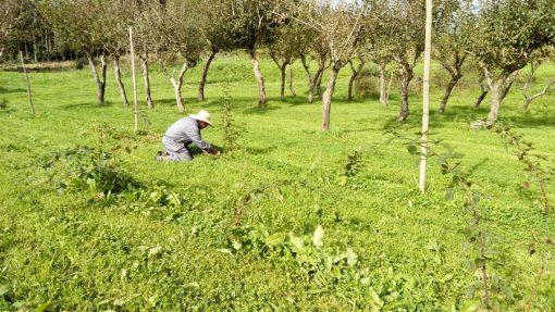 curso-agricultura-biologica-renacer-07